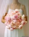 Martha_stewart_cabbage_roses795986
